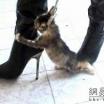 Viewing China: Kitten Killers Return – chinaSMACK - digg china