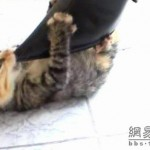 new-high-heel-kitten-killer-06