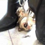 new-high-heel-kitten-killer-07