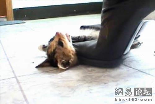 woman kills kitten with high heels - The Cutest Kittens