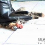 new-high-heel-kitten-killer-11