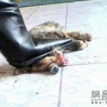 new-high-heel-kitten-killer-12