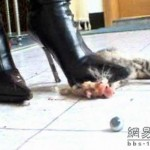 new-high-heel-kitten-killer-13