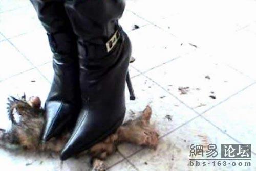 Kitten Killed By High Heels - The Cutest Kittens