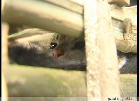 猫咪的眼神好悲哀~你在想什么呢,我可怜的咪咪。