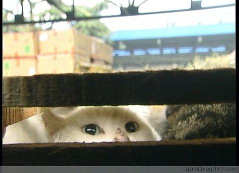 可怜的猫咪~你一定想逃出这些拥挤的死亡之栏吧
