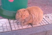 garfield-hebei-china-university-cat-02