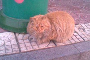garfield-hebei-china-university-cat-02