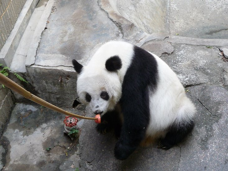 A Chinese netizen alarmed by how an old giant panda named Yongba is being taken care of in a Shenzhen zoo goes online to get other people's attention and help.