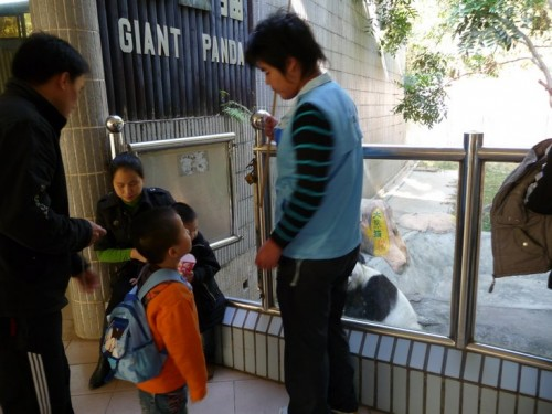 A picture of Shenzhen zoo workers arranging tourists to get a picture with the panda, Yongba.