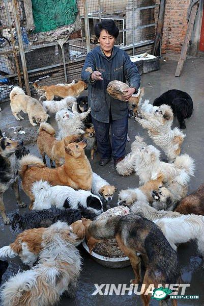 tianjin-china-stray-animal-rescuer-01