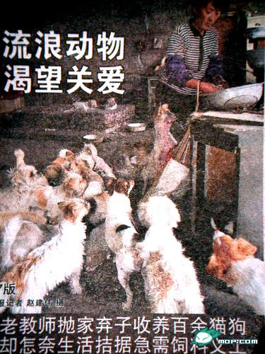 tianjin-china-stray-animal-rescuer-04