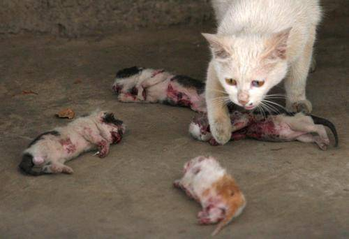 pictures of kittens and cats. abused-kittens-mother-cat-