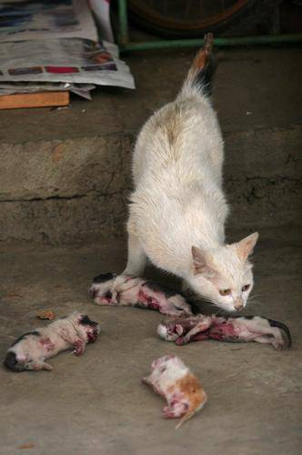 pictures of kittens and cats. The poor mother cat kept