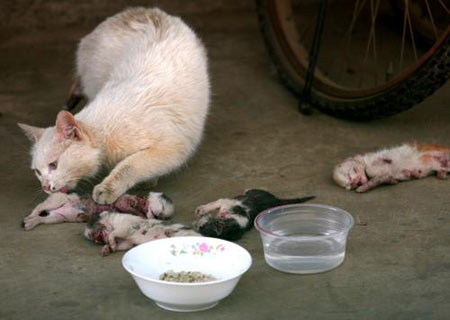 abused-kittens-mother-cat-kunming-china-03
