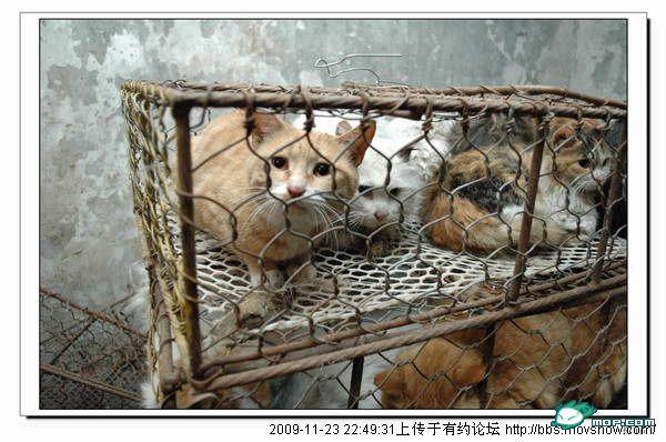 Sad Cats In Cages | www.pixshark.com - Images Galleries ...