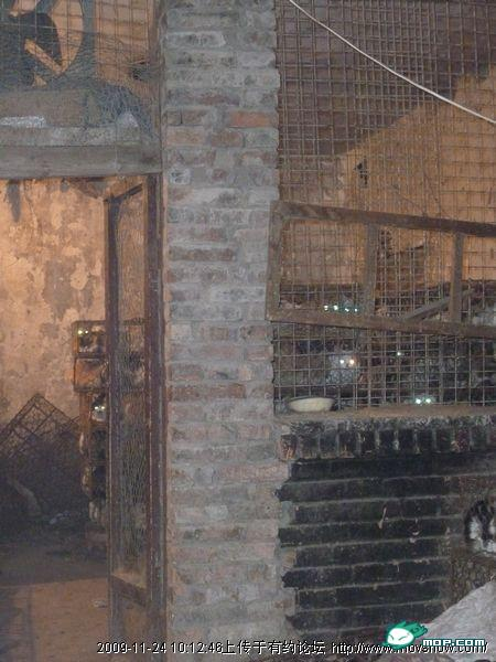 cats-cages-tianjin-china-12