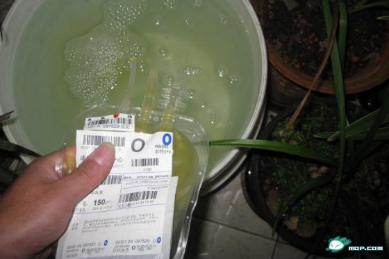 Chinese netizens are outraged when someone posts images of himself using freshly donated blood plasma from Chengdu Blood Bank as fertilizer to water his plants.