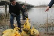 Man collecting the remains of 21 babies discarded under a bridge in Shandong, China.
