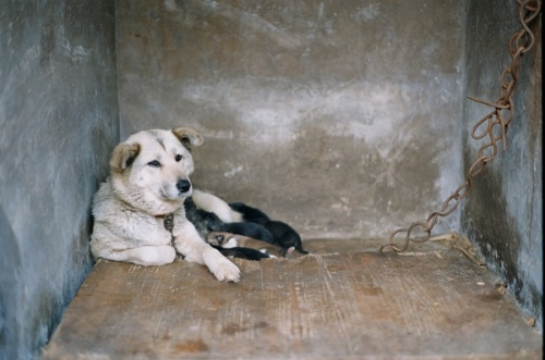 A mother dog in a concrete kennel.