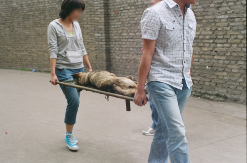 Chinese medical students carrying away a dead laboratory dog.