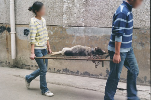Chinese medical students carrying away a dog that has died from experiments.