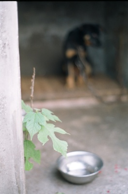 A single plant grows through the cement walls of this dog's kennel.