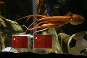 Paul the Octopus choosing between two China flags.
