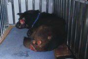 Xixi, an abused dog in Foshan, China.