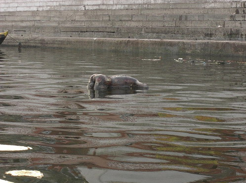 A dead body floats in the river in India.