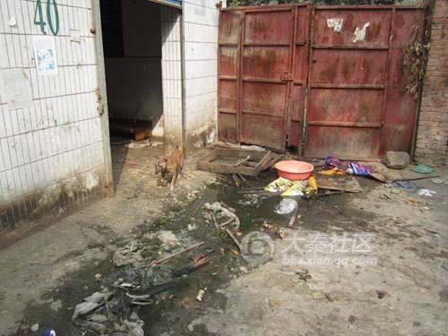 "A ""concentration camp"" for dogs in Xi'an, China."