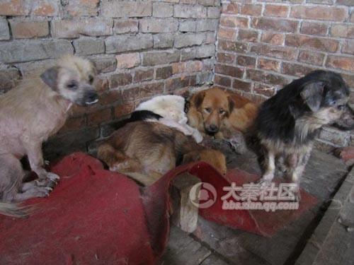 Chinese dogs living in awful conditions.