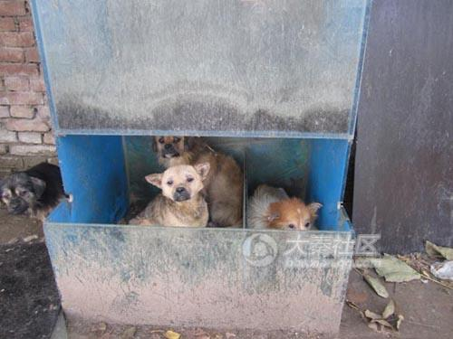 Abandoned dogs living in horrific conditions.
