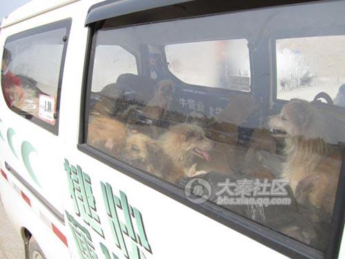 Chinese volunteers rescuing stray or abandoned dogs.