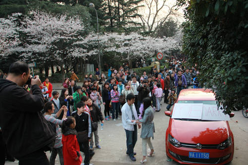 A girl romantically proposes to her boyfriend at Wuhan University during the yearly Cherry Blossom Festival.