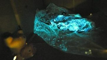 Glowing blue pork in China.