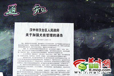 Notice of dog culling in Hanzhong.