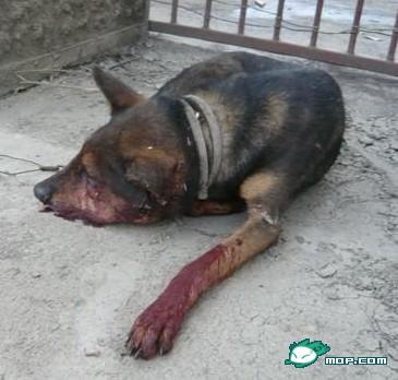 A dead and bloodied dog.