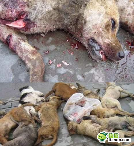 Dead dogs in China.