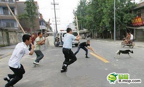 Chinese chasing after dogs with sticks.