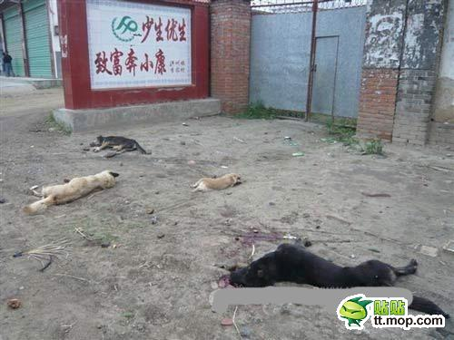 Dead dogs littered on the ground.