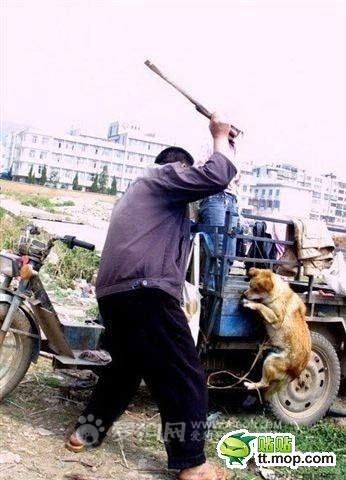 A Chinese man beating a dog.