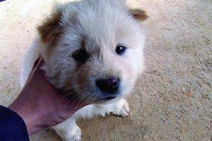 Cute white dog.
