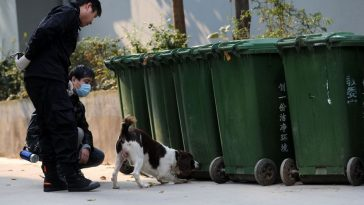 A police dog sniffs at some green garbage containers for human body parts in Hefei, China.