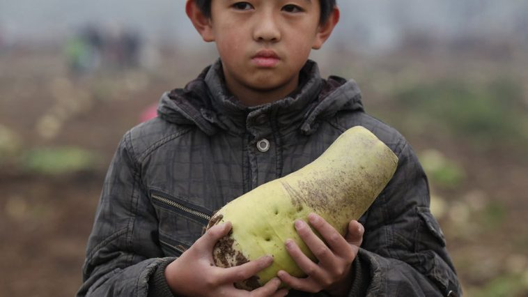 Hang Gang's son holding a turnip that had been left over by the mob of Chinese people who plundered his vegetable farm.