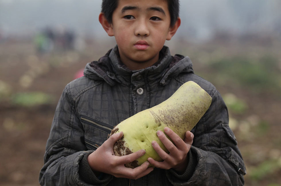 Chinese Farmer Giving Away Free Turnips Plundered by Mob