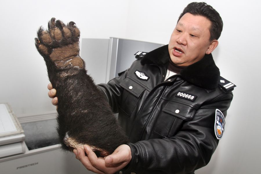 A Chinese police officer holds up a severed black bear paw that was smuggled into China and discovered at Chonqing Airport, headed to Shenzhen.