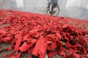 A Chinese man bikes over a street covered in the red dregs of used firecrackers.