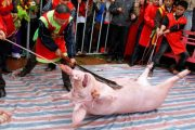 A live pig is chopped in half during the controversial Doan Thuong festival in the village of Nem Thuong, Vietnam.
