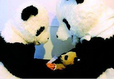 checking the panda